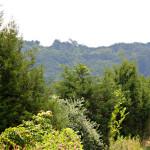 Shenandoah trees.