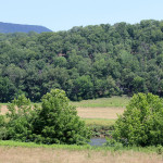 The Shenandoah River peeking through the trees 1