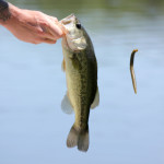 At the park's fishing pond, this man reeled in a big one as if on cue!